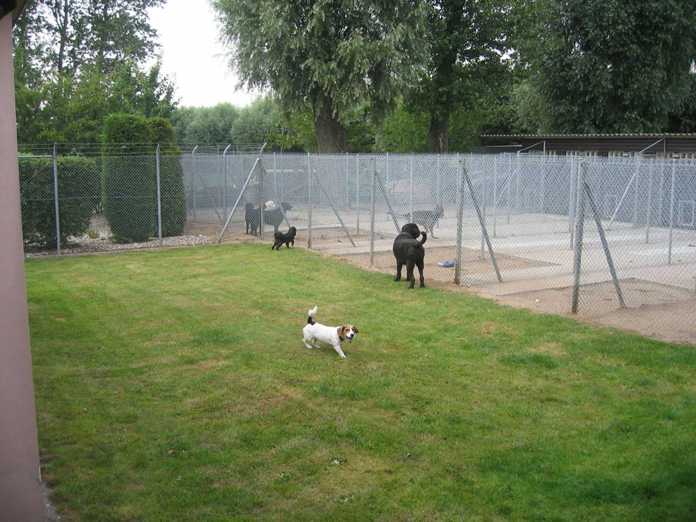 Hundewiese im Hundeparadies Hundepension Willich
