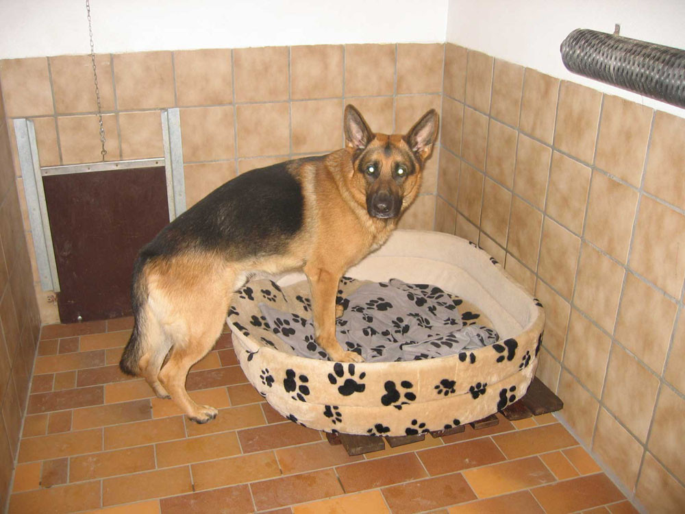 Hund im Korb im Hundeparadies Hundepension Wegberg