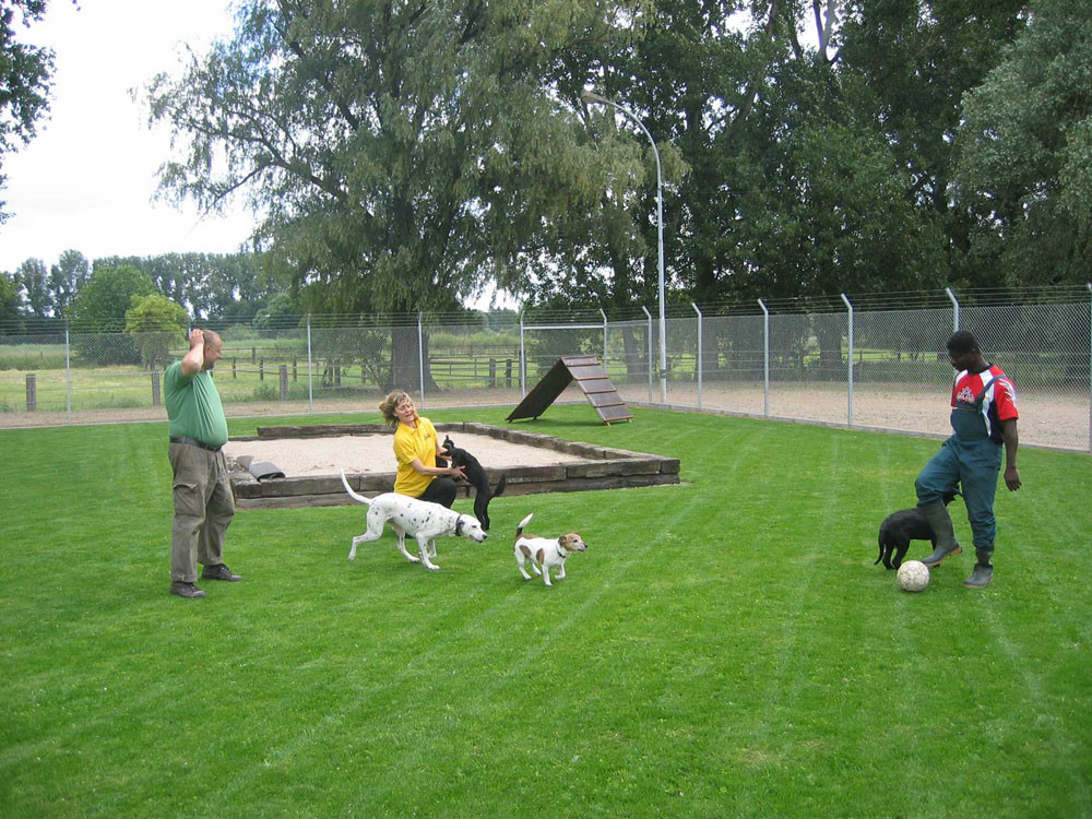 Spielen im Hundeparadies Hundepension Nettetal